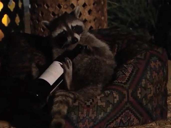 raccoon bachelor in paradise wine