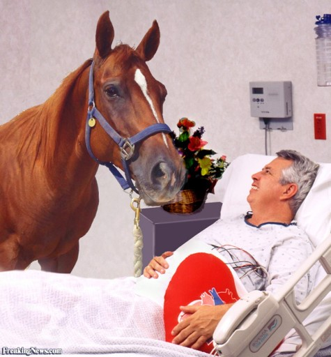horse in a hospital